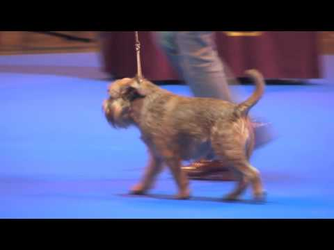 Ladies Kennel Association 2016 - Toy group FULL
