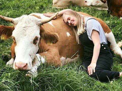 Ferientrend: Kuh-Kuscheln