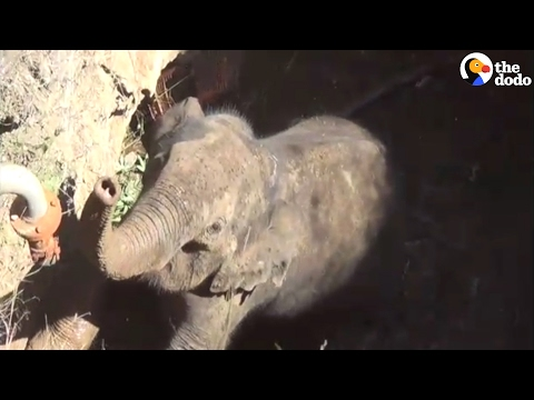 Elephant Gets Rescued From Well