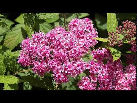 ДОБРОЕ УТРО Розовые мелкие цветочки