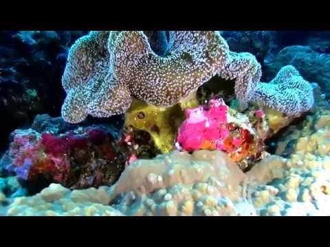 Palau  Micronesia V2 Diving Video Part1 Paul Ranky  HD Video