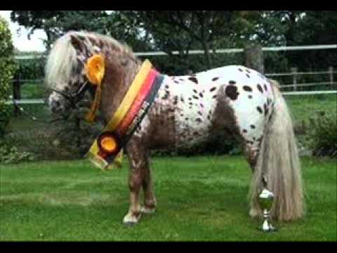 pferde und ponys in not