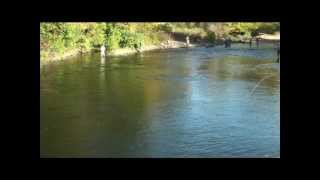 salmon river fishing report altmar new york