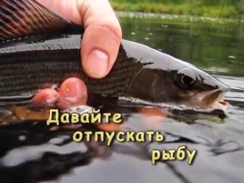 Ловля Хариуса - одежда для рыбалки