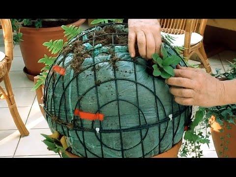 Как сформировать вазоны с петунией Сферика F1