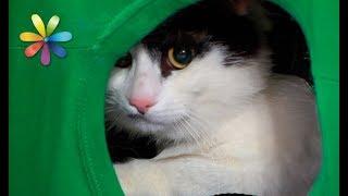 Как сделать домик для кота своими руками – Все буде добре. Выпуск 1096 от 28.09.17