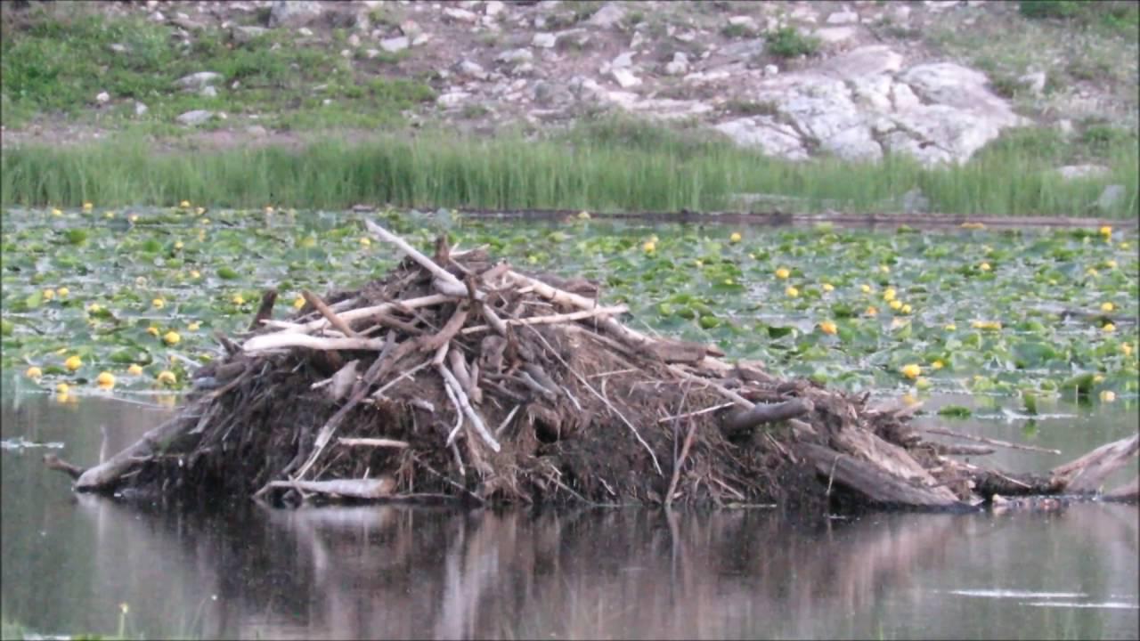 images for colorado bigfoot