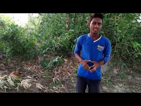 Bhojpuri Whatsapp Dans