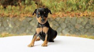 http://passerellewan.jp/puppies/?type=33.