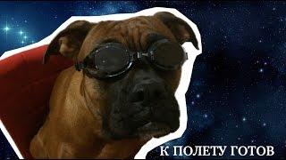последняя собака в космосе??