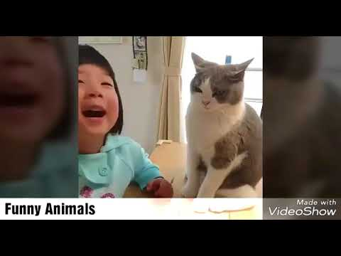 The funniest and most humorous cat videos ever! // - Funny cat compilation 2018 HD