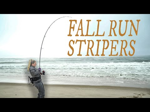 Striped Bass Surf Fishing Long Island Fall Run - Saltwater - * BIG WAVE TAKES HER DOWN * 1 Eye Fish