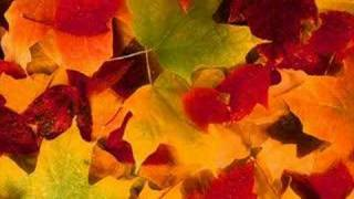 Autumn Leaves (instrumental)