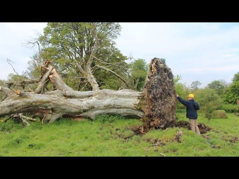 A Gale Uprooted This Tree – And Scientists Discovered Something Shocking Beneath It