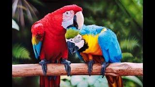 Попугаи, из всех видов птиц только они обладают самой яркой и разнообразной расцветкой.