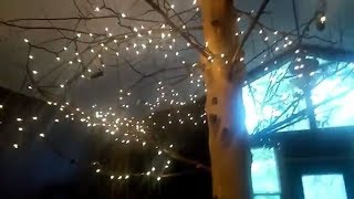 Eureka Springs Mini Honeymoon/ Treehouse Tour