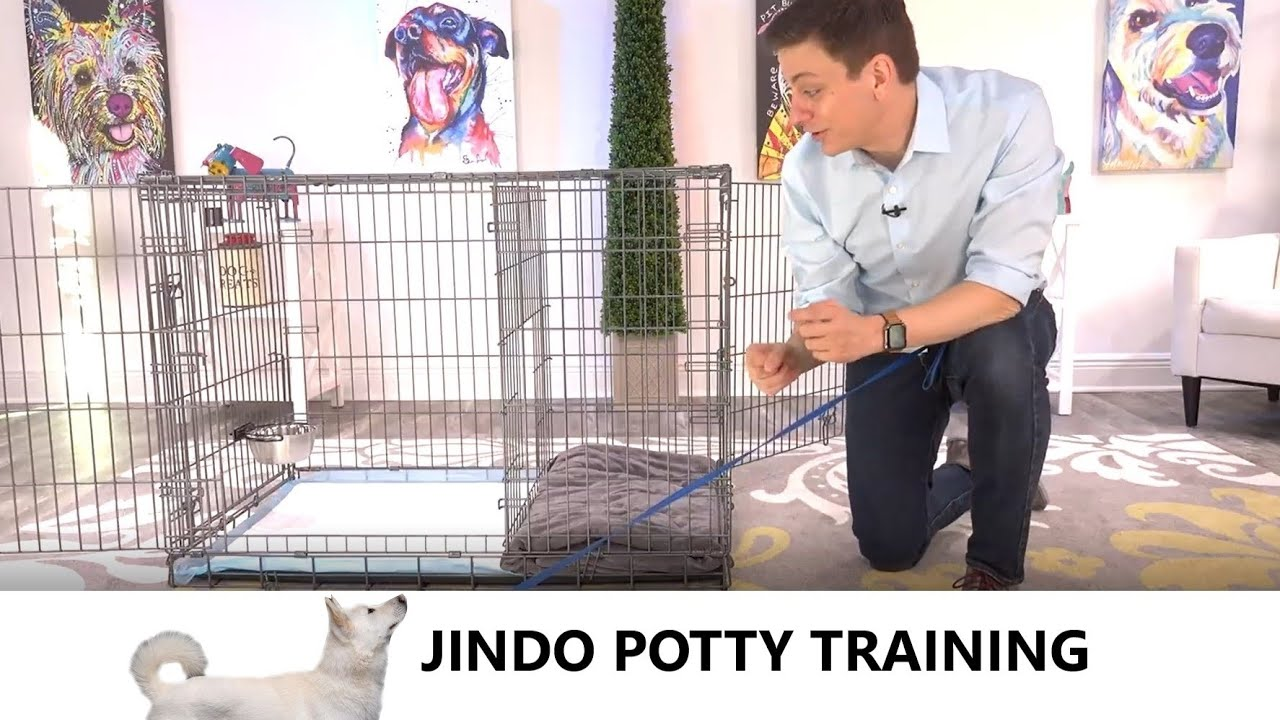 Jindo Potty Training from World-Famous Dog Trainer Zak George - How to Potty Train a Jindo Puppy