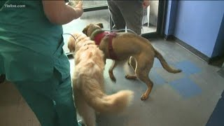 2 dogs rescued from South Korea meat trade need homes