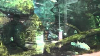 Bass Pro Shop(Outdoor World) part 4
