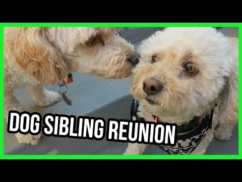 My Dog Reunites With Her Brother After 2 Years of Separation