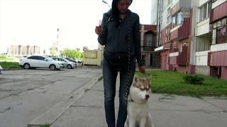 """FoxisPet: как научить собаку команде """"Рядом"""""""