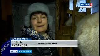 Многодетная семья из Новосибирской области занялась переработкой козьего молока