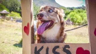 Rescue Dog makes a Kiss Booth