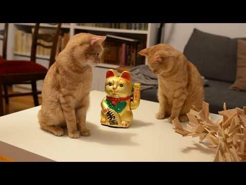 Cats VS Maneki-neko