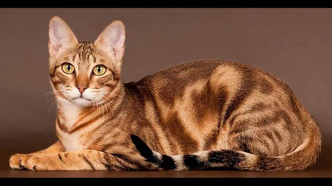 Смешные коты фото понять и простить области головы
