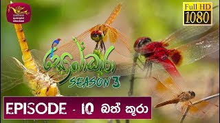 Sobadhara - Sri Lanka Wildlife Documentary | 2019-05-17 | Dragon Fly Thumbnail