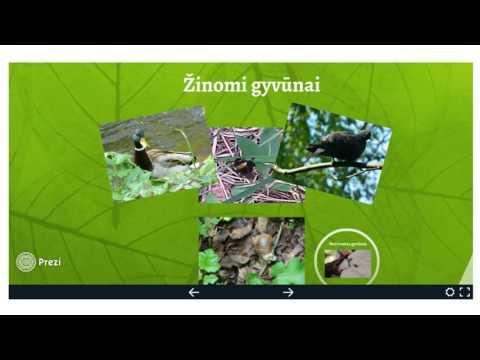 """Raminta Lipienė. Tarpmokyklinis integruotas projektas """"Tyrinėjame Vilniaus miesto parkus"""""""