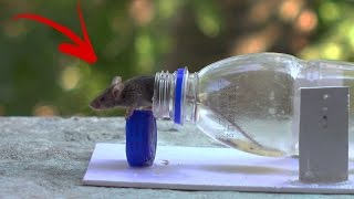 Mouse trap How To Make a Mouse Trap at Home