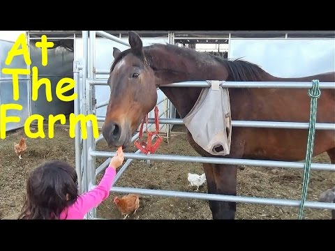 Visit at the Farm Petting ZOO Learn Farm Animals Names and Sounds Fun Educational