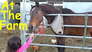 Visit at the Farm Petting ZOO Learn Farm Animals Names and Sounds Fun Educational thumbnail
