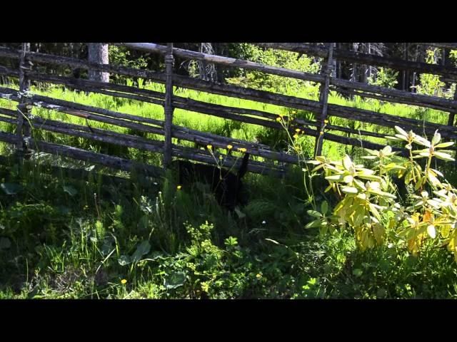 Arockmove valparna 2015 8 veckor 003