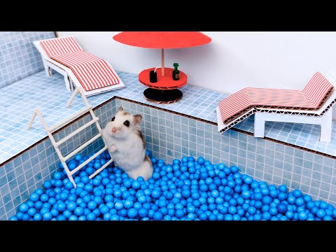Pool maze for cute Hamster - playground for pets in real life |