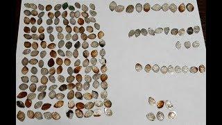 Найденные Клады, с 29 июля по 4 августа, 2019, Found Treasures, from July 29 to August 4