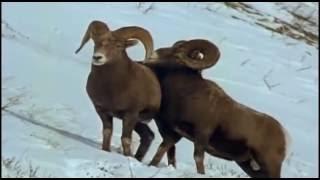 О гомосексуальности животных - ЛГБТ-проп врет
