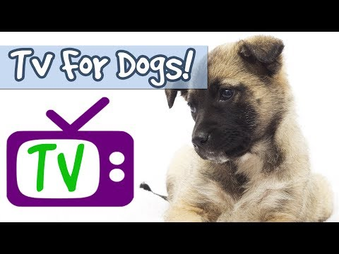 tv-for-dogs-combined-with-relaxing-music-to-relieve-anxiety,-stop-barking,-nature-footage-for-dogs🐶