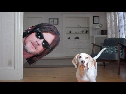 Dogs vs Norman Reedus Prank: Funny Dogs Maymo & Potpie