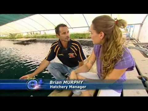 Series 9   Prawn Aquaculture Gold Coast Marine   Episode 14