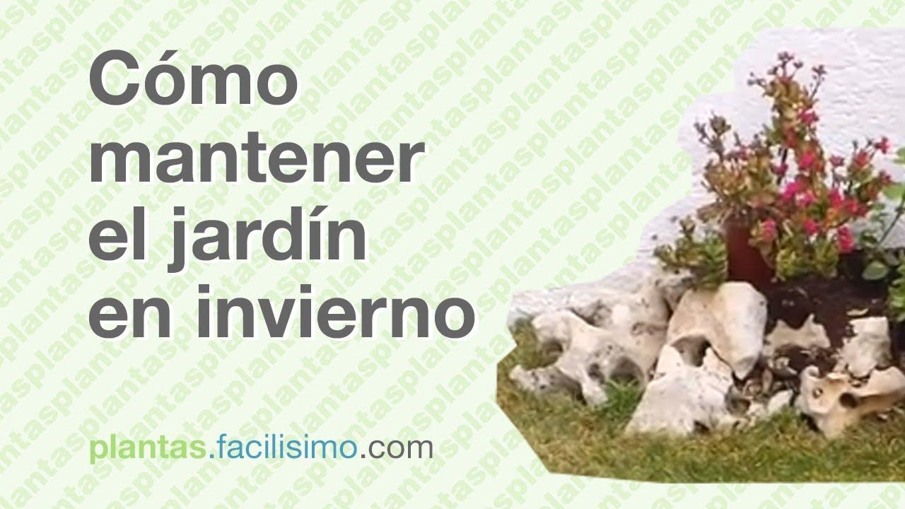 C mo mantener el jard n en invierno youtube - Jardin de invierno ...
