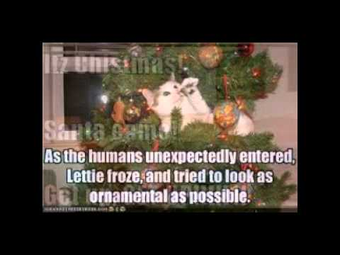 Funny Christmas captions and pictures
