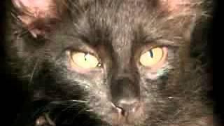 О чёрт! Моя кошка Эмо! Oh shit! My cat Emo!(, 2012-10-17T18:38:44.000Z)