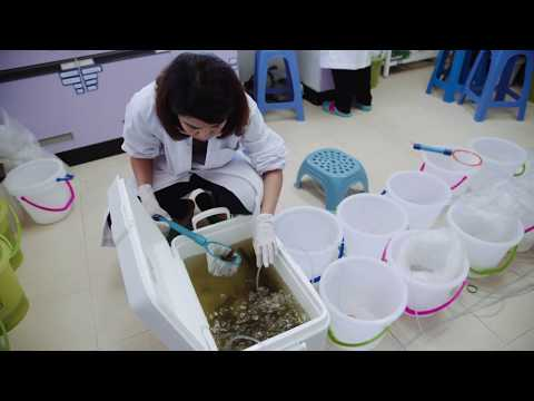 Biotechnology : Changing lives in Asia-Pacific | Coastal Aquaculture Research Thailand (Shrimp)