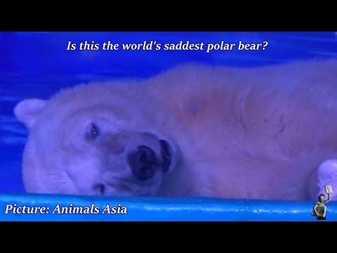 'World's saddest polar bear' kept in shopping centre 'suffers for selfies'