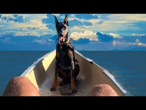 MY DOBERMAN IN A CANOE (Peed on frog)