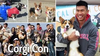 200 Corgis Invade San Francisco Beach - Life After College: Ep. 375