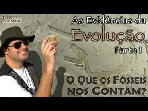 As Evidências da Evolução [1] - O que os fósseis nos contam?