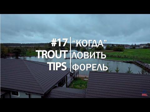 Trout Tips #17. Лучшее время для ловли форели